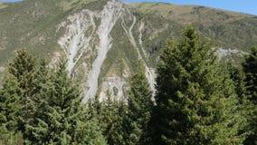 L'abete rosso conifero e le alte montagne di Tien Shan hanno riguardato il paesaggio verde della foresta stock footage