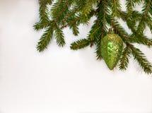 L'abete verde si ramifica con la pigna su fondo bianco Fotografia Stock