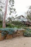 L'aborigeno ha abbellito il giardino con gli alberi di gomma enormi Immagini Stock Libere da Diritti