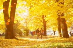 L'abrégé sur automne a brouillé le fond avec les lumières magiques Photo stock