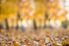 L'abrégé sur automne a brouillé le fond avec les lumières magiques Photos stock