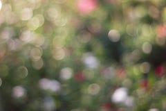 L'abrégé sur Bokeh allume la vue Photographie stock libre de droits