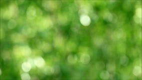 L'abrégé sur nature brouillé de l'arbre vert vibrant part dans le vent doux et la lumière du soleil banque de vidéos