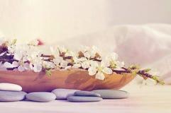 L'abricot de floraison s'embranchent dans un château en bois et des pierres de mer sur un fond clair Photo libre de droits