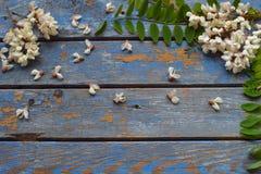 L'acacia blanc fleurit la frontière Anniversaire, Mother& x27 ; jour de s, Valentine& x27 ; jour de s, carte le 8 mars, de mariag Photos stock