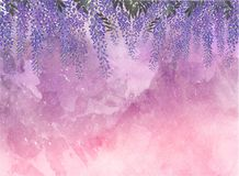 L'acacia de lavande fleurit le contexte photos stock
