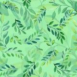 L'acacia laisse à modèle la conception florale verte Photo stock
