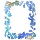 L'acacia laisse le cadre dans un style d'aquarelle Image libre de droits