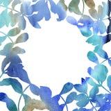 L'acacia laisse le cadre dans un style d'aquarelle Photographie stock libre de droits