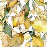 L'acacia laisse le modèle dans un style d'aquarelle Photos libres de droits