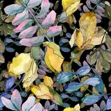 L'acacia lascia il modello in uno stile dell'acquerello Immagini Stock