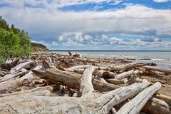 L'accumulazione del legno della deriva sulla riva del bacino idrico di Ob' Immagini Stock Libere da Diritti