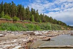 L'accumulazione del legno della deriva sulla riva del bacino idrico di Ob' Immagine Stock