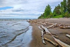 L'accumulazione del legno della deriva sulla riva del bacino idrico di Ob' Fotografia Stock