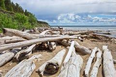 L'accumulazione del legno della deriva sulla riva del bacino idrico di Ob' Fotografia Stock Libera da Diritti