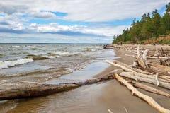 L'accumulazione del legno della deriva sulla riva del bacino idrico di Ob' Fotografie Stock Libere da Diritti
