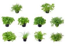 L'accumulazione dell'erba Fotografia Stock