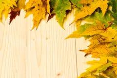 L'acero ha asciugato la foglia sul fondo di legno della luce naturale Le foglie cadute autunno si sono raccolte nella fila su fon immagini stock libere da diritti