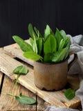 L'acetosa organica fresca lascia in tazza del metallo per insalata o minestra Primi verdi della sorgente Concetto sano dell'alime Immagini Stock Libere da Diritti