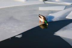 L'acqua è fredda Fotografia Stock Libera da Diritti