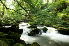 L'acqua cade attraverso il legno Immagini Stock Libere da Diritti