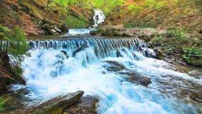 L'acqua cade sopra le rocce attraverso il sottobosco denso della felce di una foresta carpatica archivi video