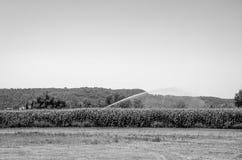 L'acqua della macchina di irrigazione il campo di grano di mais un giorno di estate caldo, conservante la dalla siccità Fotografia Stock Libera da Diritti