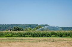 L'acqua della macchina di irrigazione il campo di grano di mais un giorno di estate caldo, conservante la dalla siccità Fotografie Stock