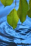 L'acqua increspa la priorità bassa della natura dei fogli fotografie stock