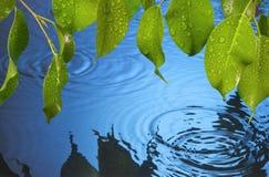 L'acqua increspa la priorità bassa della pioggia dei fogli fotografie stock