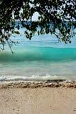 L'acqua luminosa ruvida ondeggia con un albero tropicale Immagine Stock