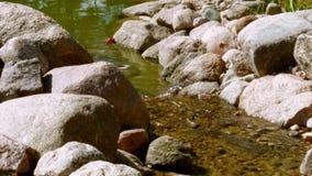 L'acqua passa la soglia con le pietre archivi video