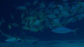 l'acqua profonda blu 4K con i pesci nuota subacqueo al fondo del mare archivi video