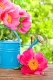 L'acqua può in giardino Immagine Stock Libera da Diritti