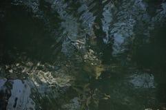 L'acqua riflette Immagine Stock Libera da Diritti
