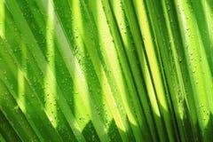 L'acqua verde del leafwith cade la priorità bassa Immagini Stock Libere da Diritti