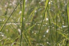 L'acqua versa spruzza e bokeh dall'innaffiatura nello spirito del giardino dell'estate Immagini Stock