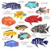 L'acquario d'acqua dolce pesca lo stile piano stabilito o dell'icona delle razze illustrazione di stock