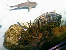 L'acquario nazionale Fotografie Stock
