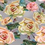 L'acquerello del materiale illustrativo fiorisce le rose illustrazione vettoriale