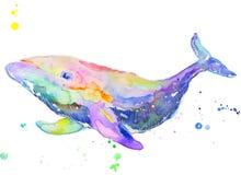 L'acquerello dell'acquerello della balena ha isolato immagini stock