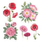 L'acquerello fiorisce la raccolta illustrazione vettoriale