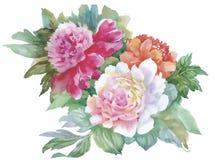 L'acquerello fiorisce nello stile classico su un fondo bianco Fotografie Stock Libere da Diritti