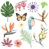 L'acquerello ha messo con i fiori e l'elemento esotici della foglia illustrazione di stock