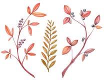 L'acquerello ha messo con il ramo di autunno, foglie di giallo royalty illustrazione gratis