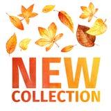 L'acquerello lascia la nuova raccolta royalty illustrazione gratis