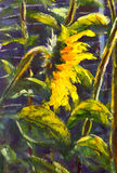 L'acrilico dei girasoli, pittura a olio che l'arte dipinta a mano originale del girasole fiorisce, bei girasoli dell'oro in sole  Fotografia Stock
