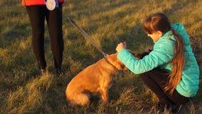 L'adolescente demande la patte et les courses de chien le chien principal famille marchant en automne en parc avec un chien banque de vidéos