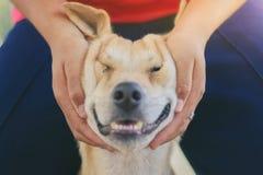 L'adolescente sta massaggiando il suo cane marrone immagini stock libere da diritti