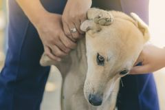 L'adolescente sta massaggiando il suo cane marrone fotografie stock libere da diritti